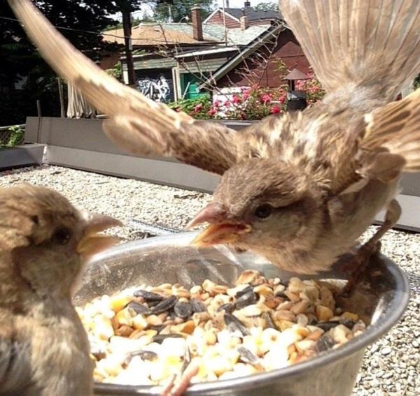 Scary Sparrow 2