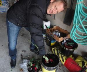 Bill Korenowski dips roses in liquid waterproofing membrane