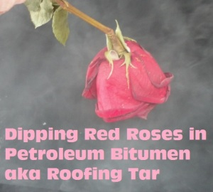 red roses dipped in flat roofing tar