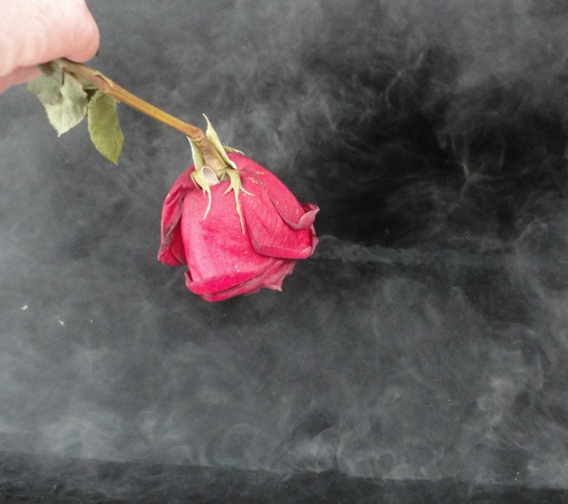 red rose over hot roofing tar