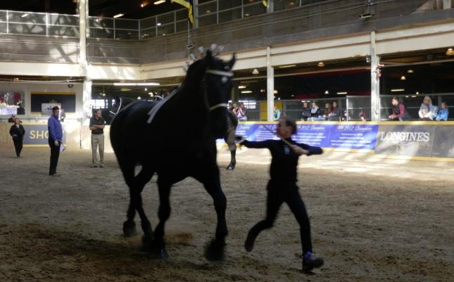 horse-show2
